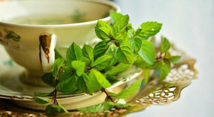 Nane Çayının Faydaları Nelerdir?