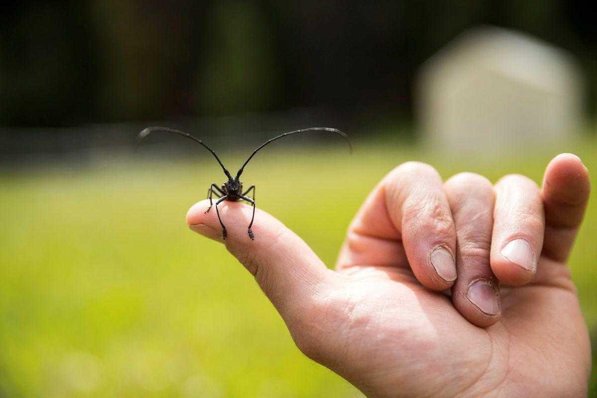 Böcek Alerjisi ve Sıkça Sorulan Sorular