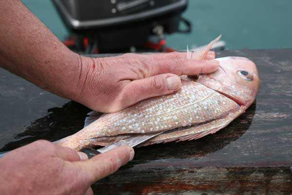 Balık Temizlemenin İpuçları: Balık Temizleme Yöntemleri Nelerdir?