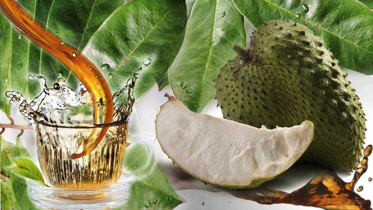 Tarçın Elması ( Graviola) Yemeye Hemen Başlamanız için 6 Neden