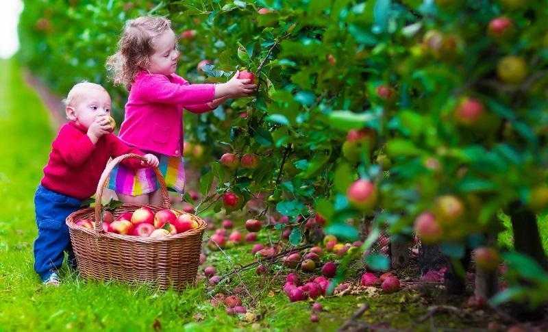 Organik Beslenmek Nedir? Organik Beslenmenin 12 Avantajı ve Dezavantajı