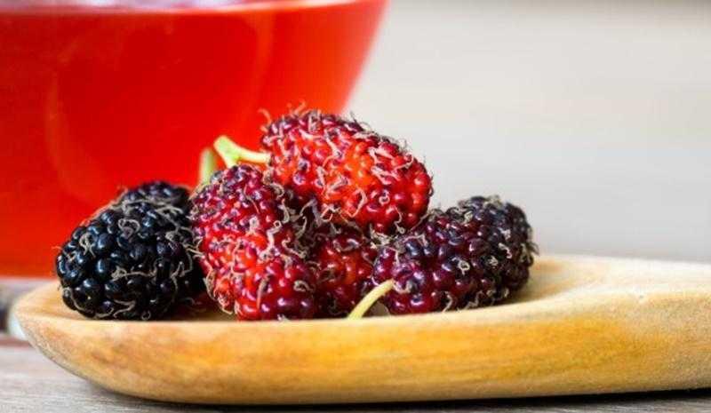 Kalbi Ve Karaciğeri Koruyan Meyve Dut