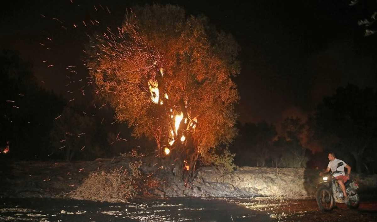 Dalaman'da başlayan orman yangını 17 saat sonra bu sabah Göcek yakınlarında kontrol altına alındı