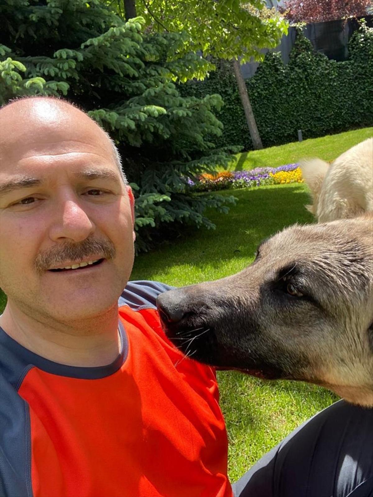 İçişleri Bakanı Süleyman Soylu sahiplendiği sokak köpekleri Bulut ve Duman'ın fotoğraflarını paylaştı